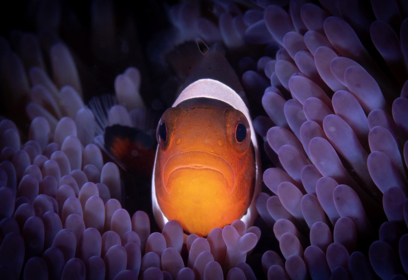 Siladen Dive Resort
