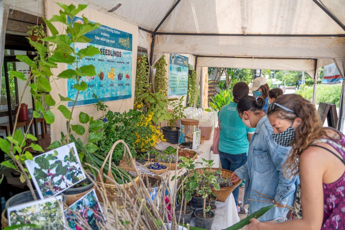 Protecting the Natural Beauty of Koa Tao