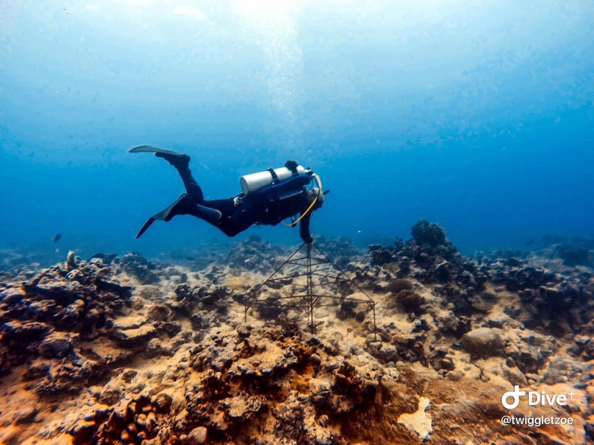 Coral Regeneration Program in Rarotonga