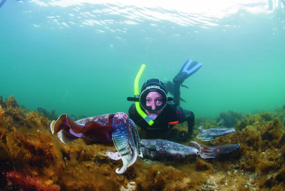 Giant Cuttlefish fishing restrictions lifted in South Australia