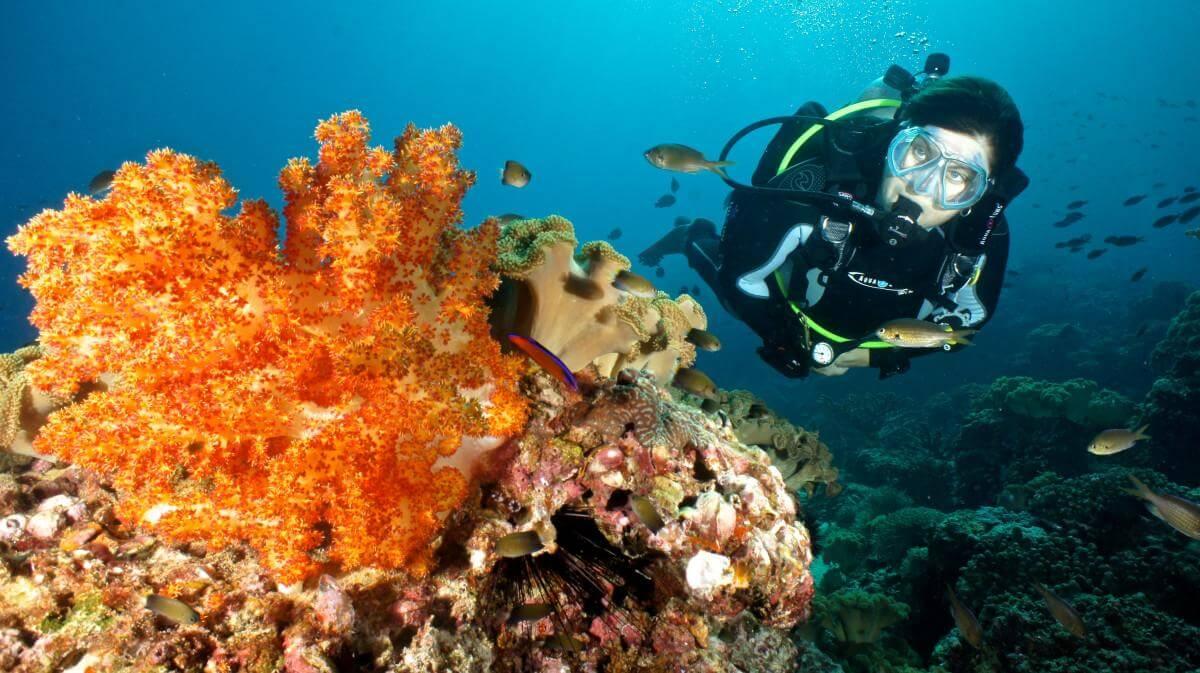 Daymaniyat Islands Diving in Oman