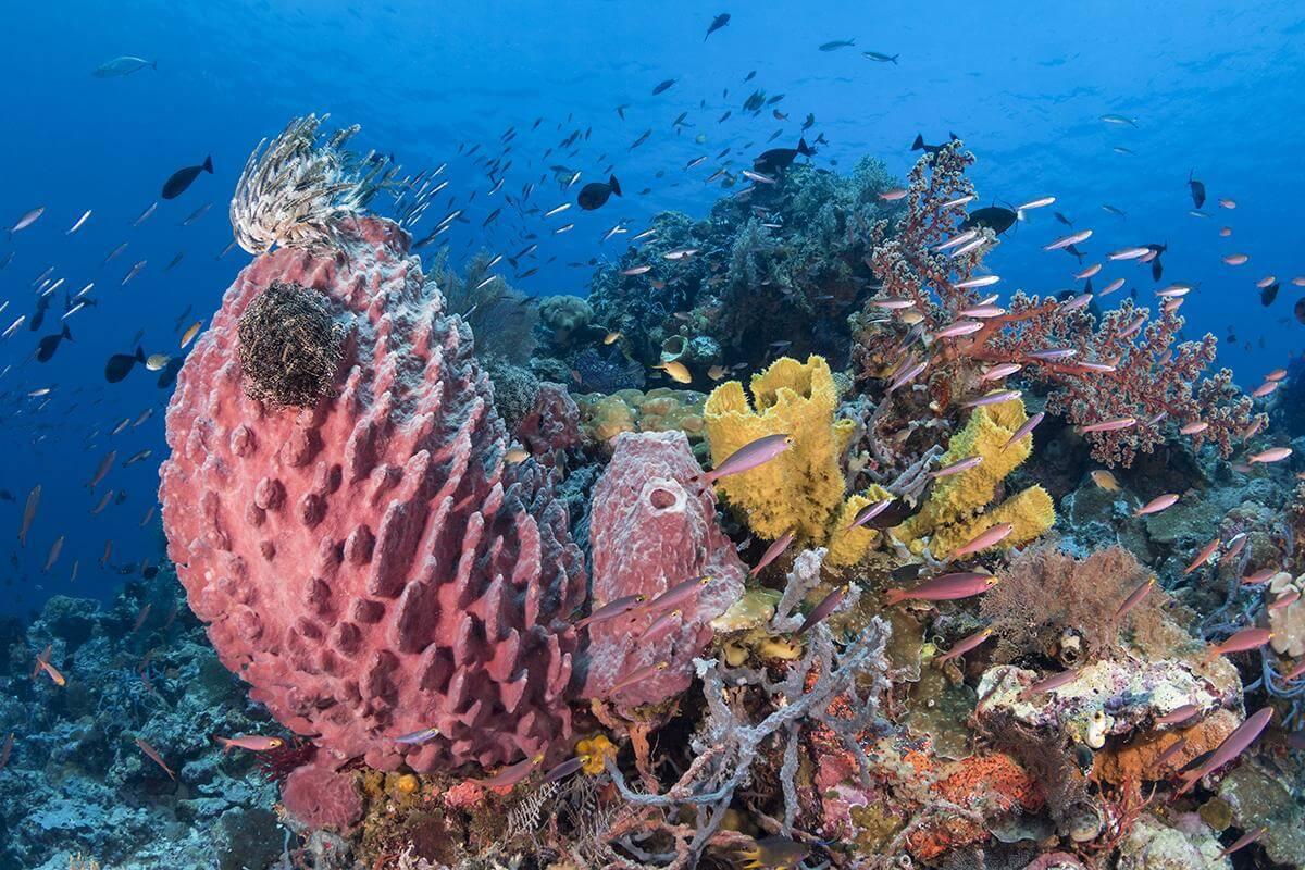 Dive site Blade at Wakatobi Indonesia