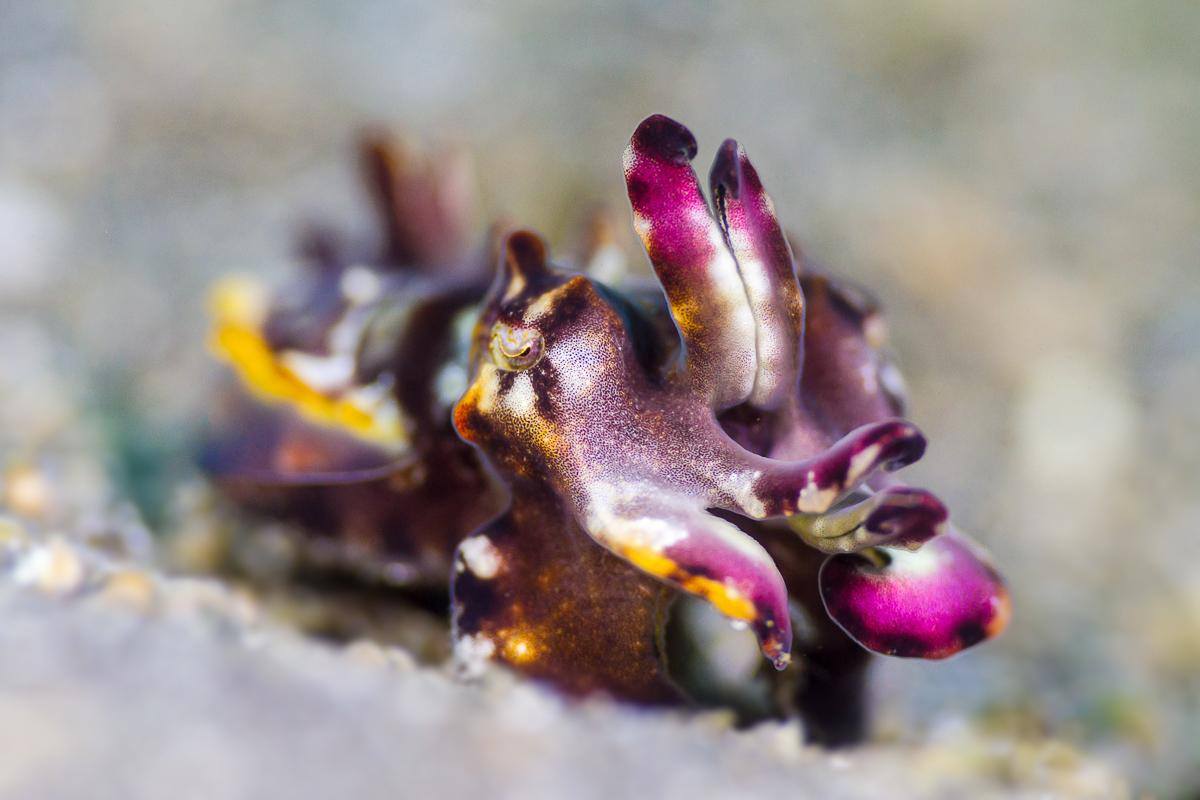 Underwater Photography in the Lembeh Strait