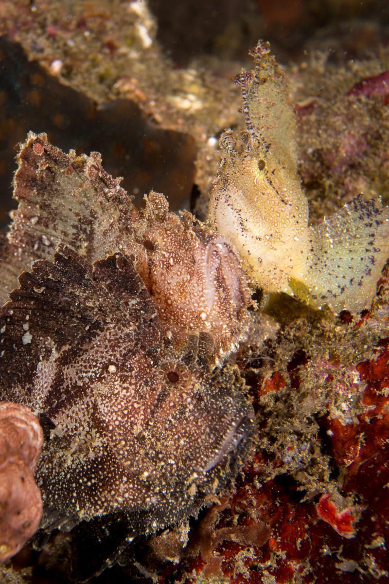 Top 5 Best Dive Sites of Siladen, Bunaken Marine Park, Indonesia