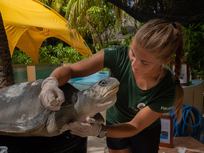 Beautiful Maldives - Turtles, Mantas and Whalesharks