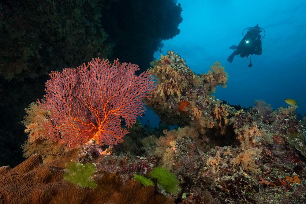 Fiji's Best Dive Sites - Part 2, Fantastic