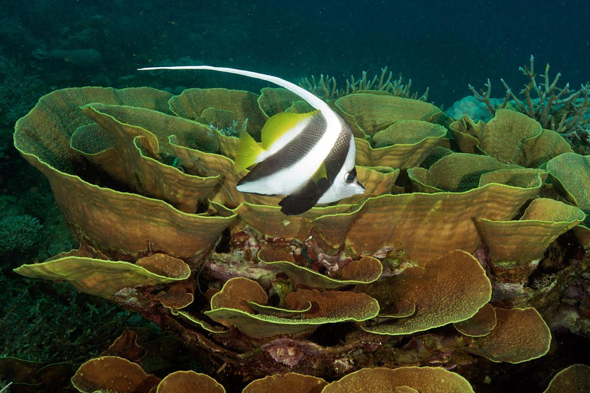 The Spectacular Reefs of New Caledonia