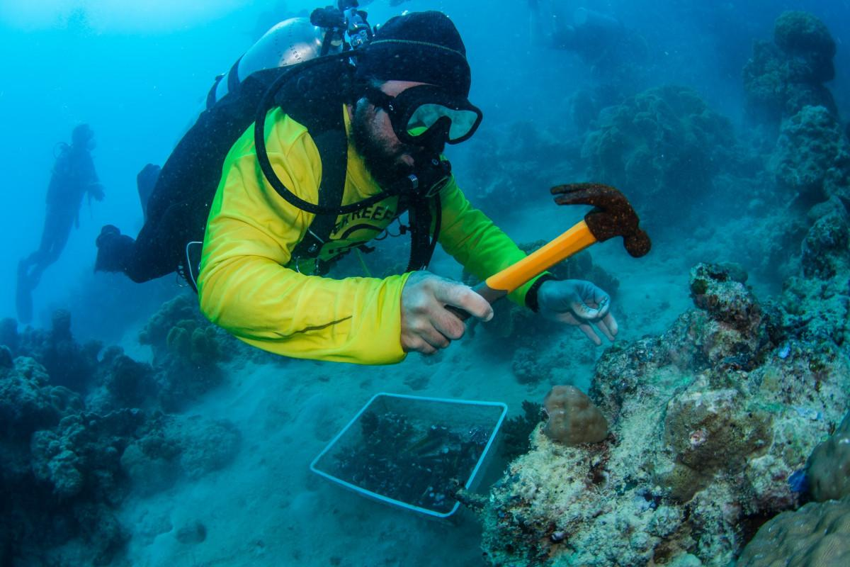 passionate about coral planting