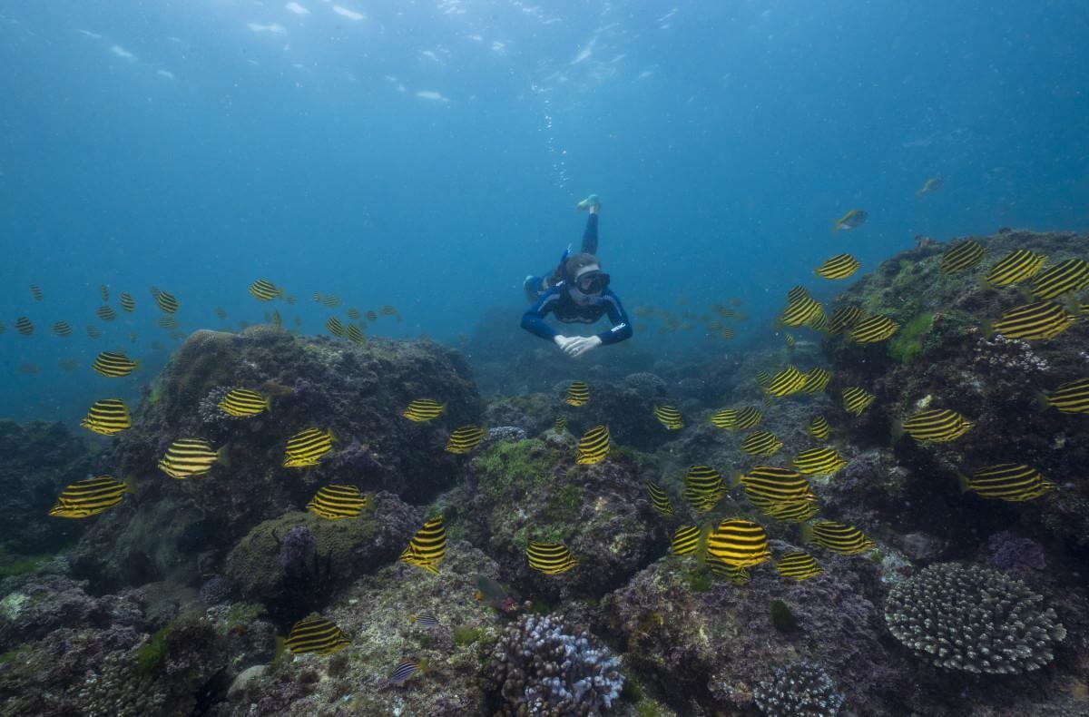 Scuba Diver at Cook Islands