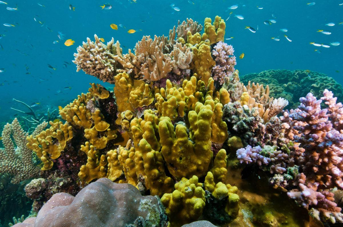 Breakthrough for the Reef