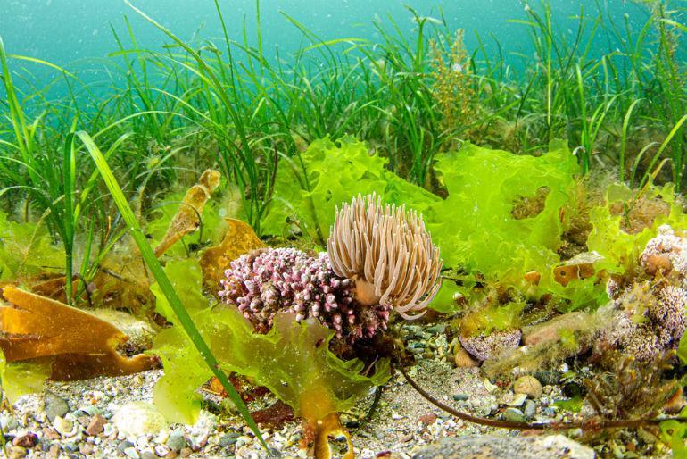 Ocean Conservation Trust