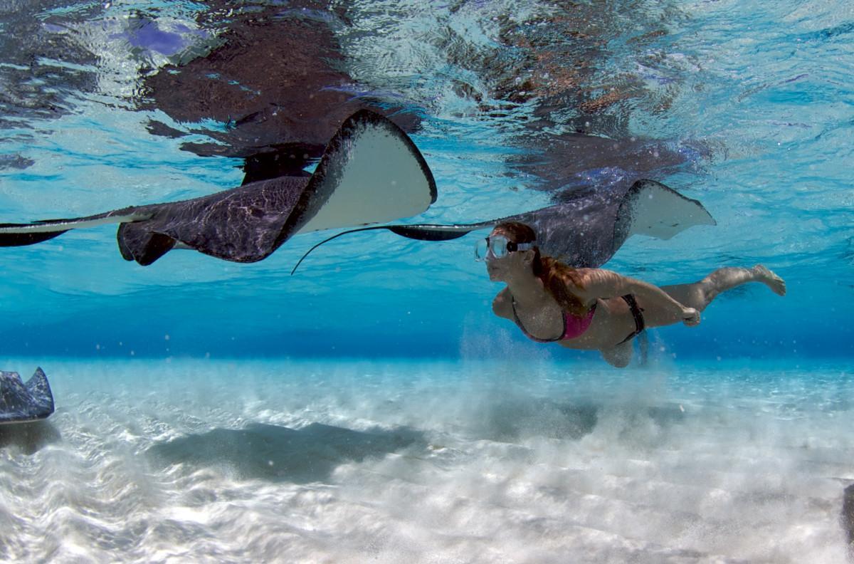 Stingray City Photo Credit Cayman Islands Department of Tourism