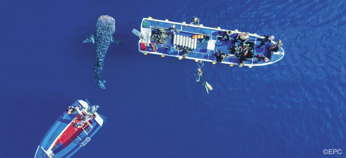 The Philippines 8 Best Dive Destinations