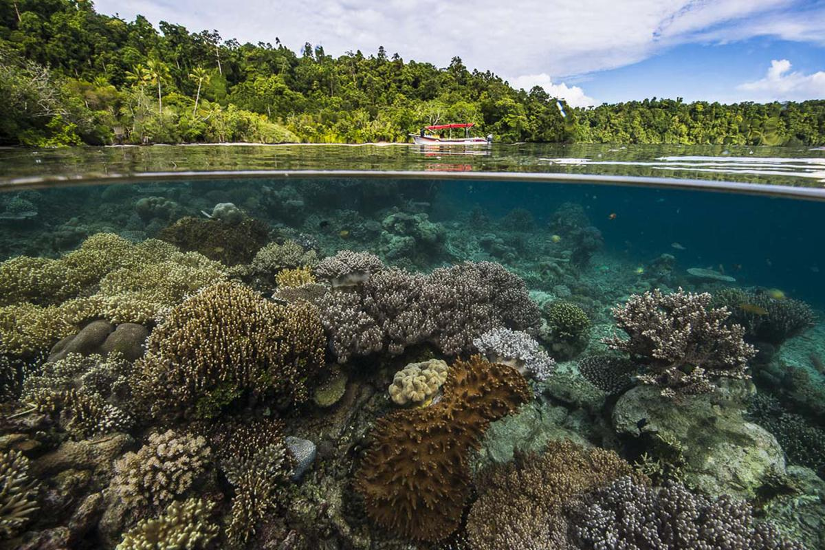 5 Coral Reef Facts