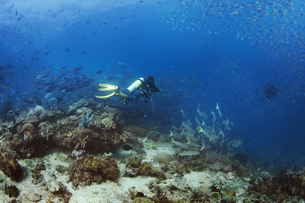 Diver Current