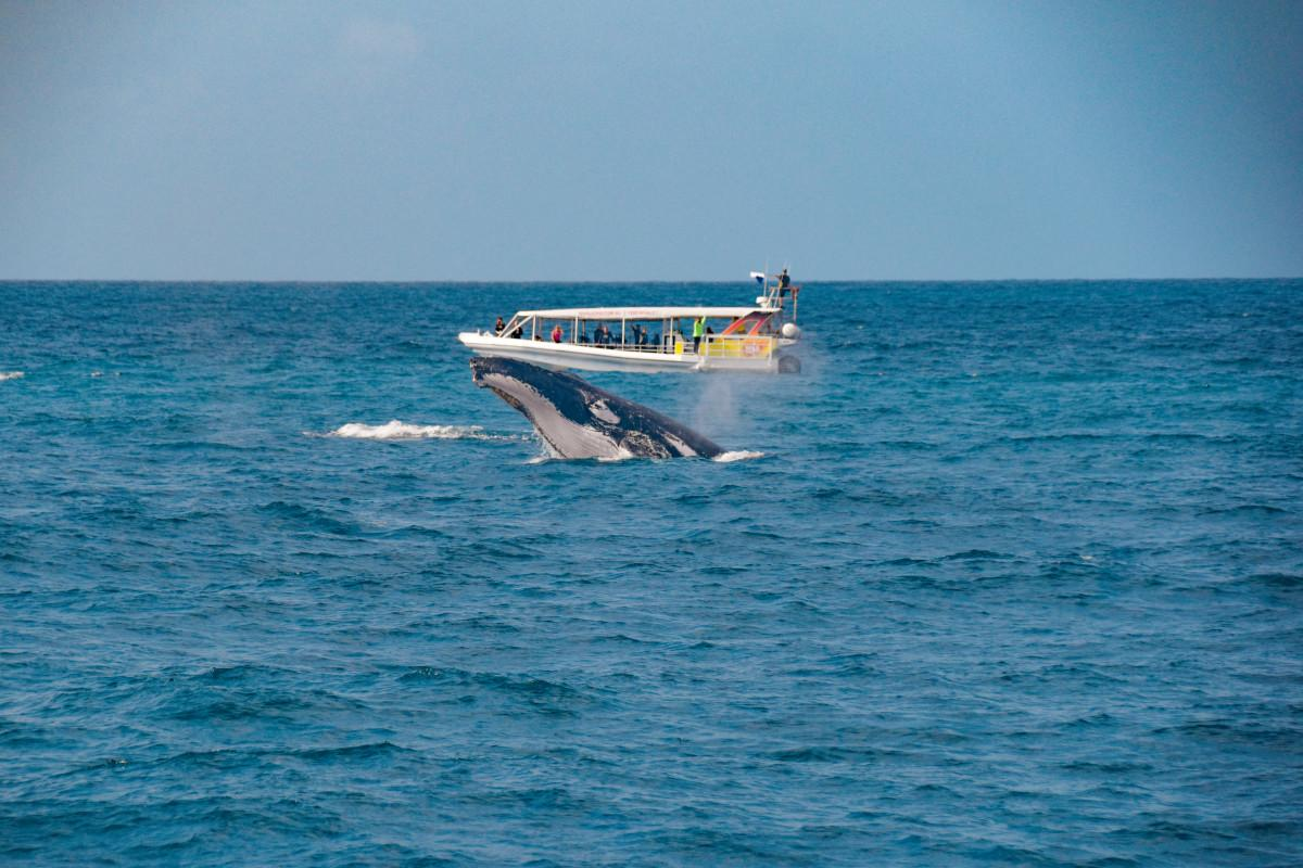 Spectacular 2020 Whale Watching Season