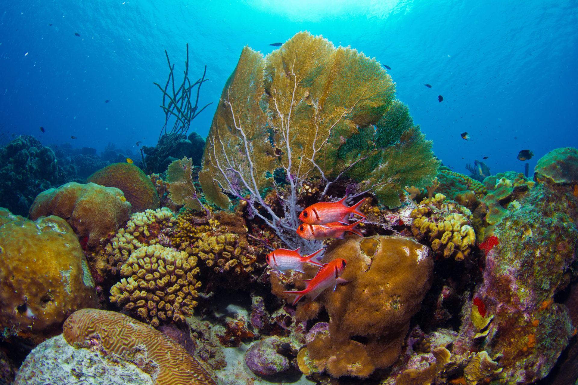 Bonaire Coral reef