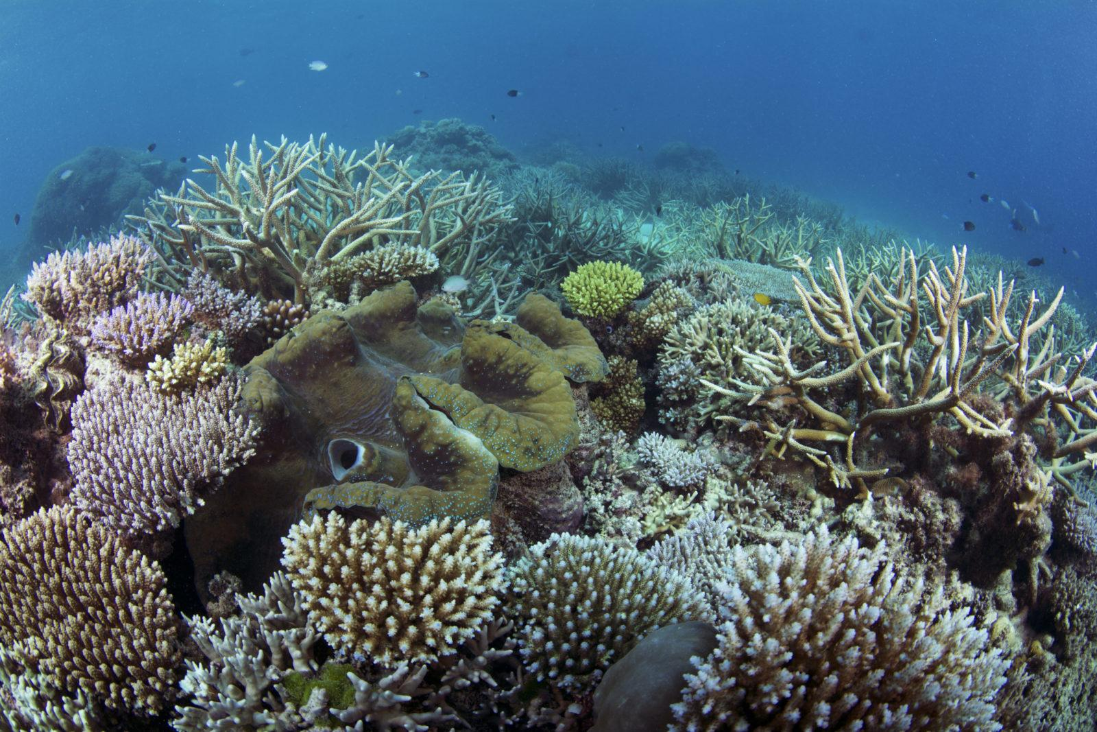 A Guide to Some of Australia's Best Dive Sites