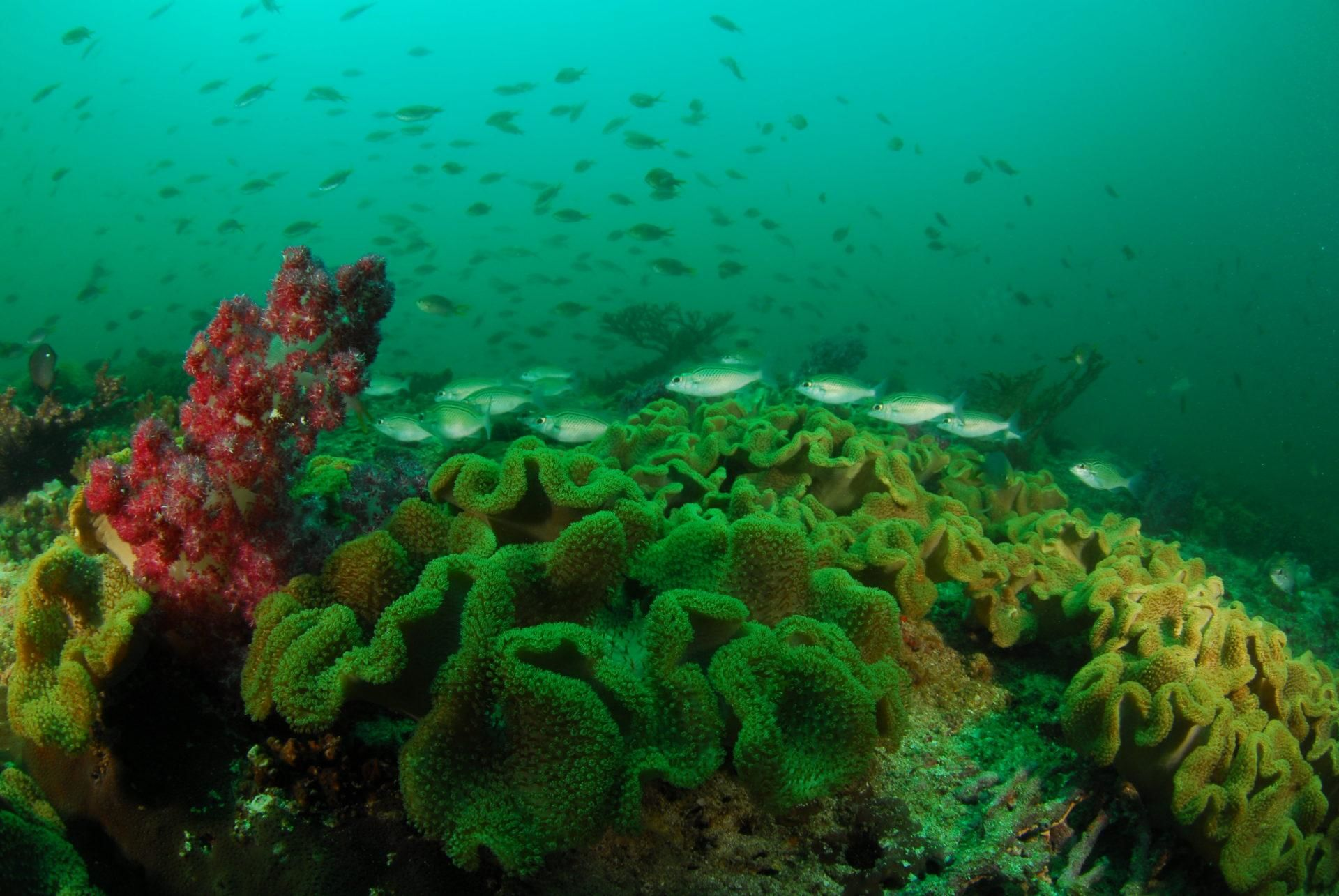 Magical Muscat Oman Scuba Diving at its Best