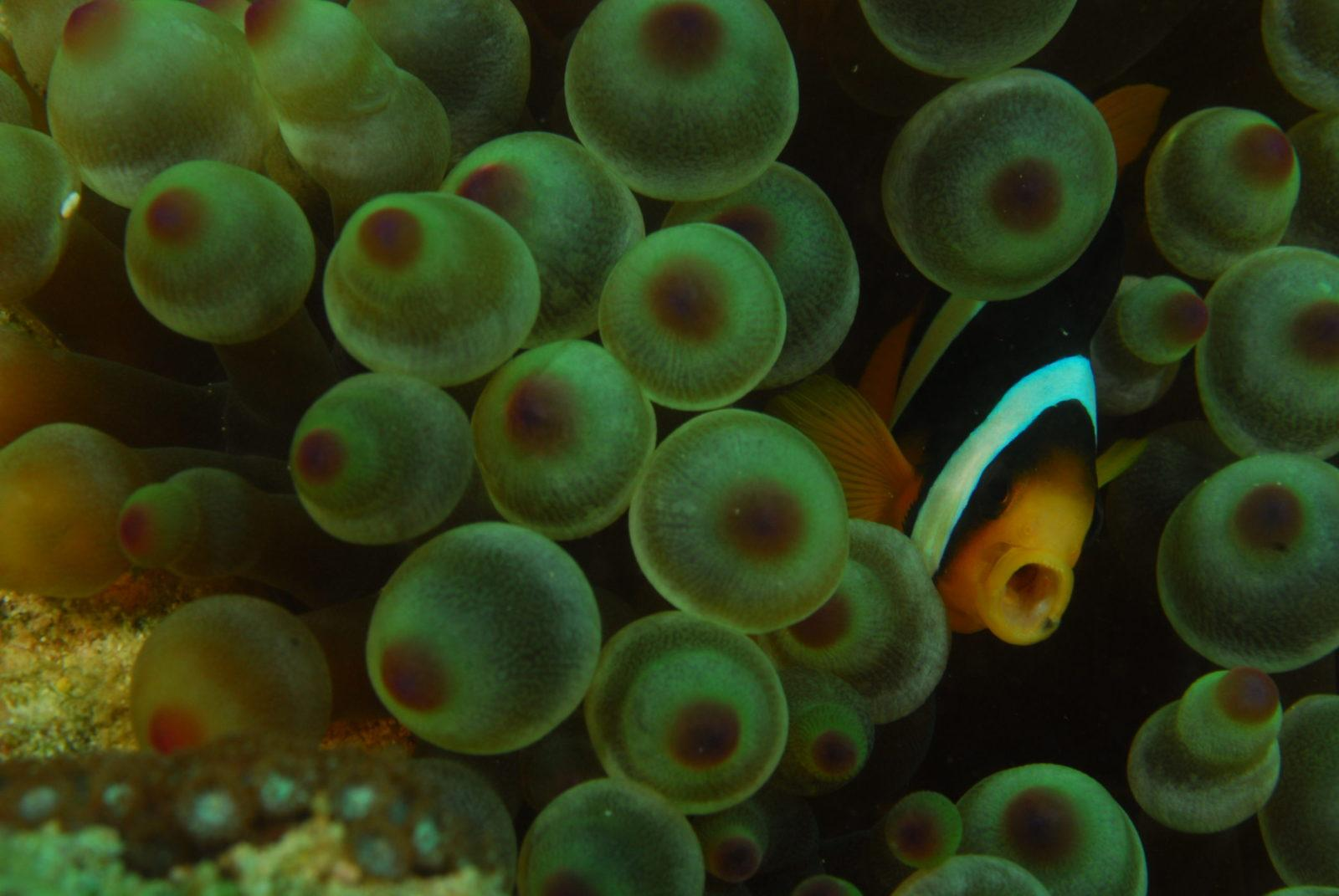 Magical Muscat Oman Diving at its Best