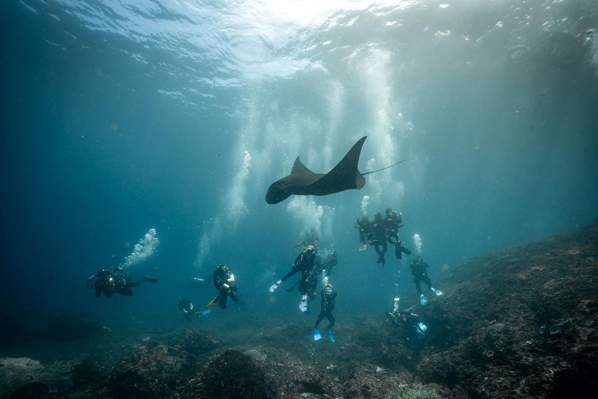 Asia Indonesia Bali Nusa Penida Diving, Manta Diving