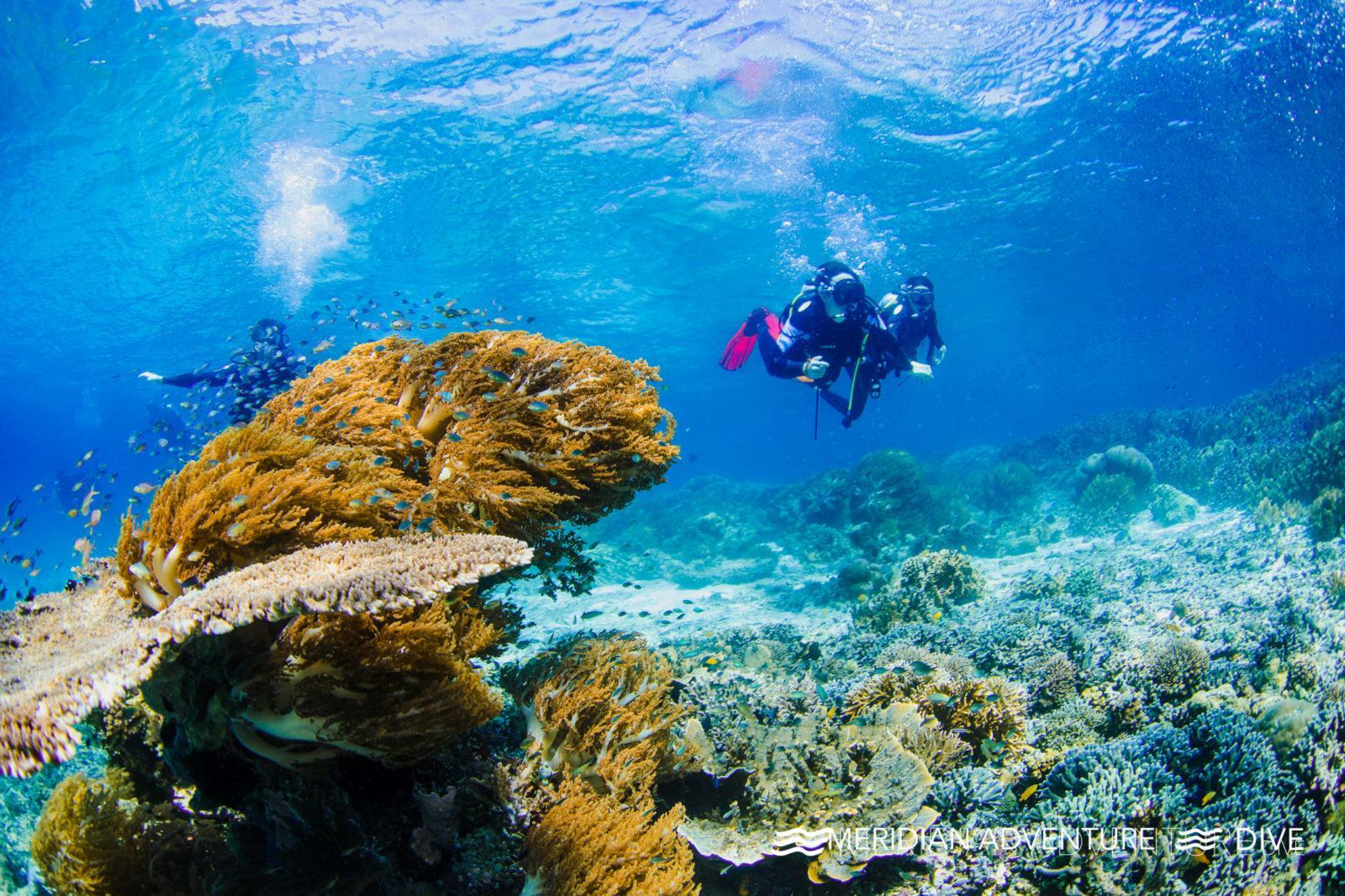 Meridian Adventure Dive - Eco-conscious Raja Ampat dive resort.