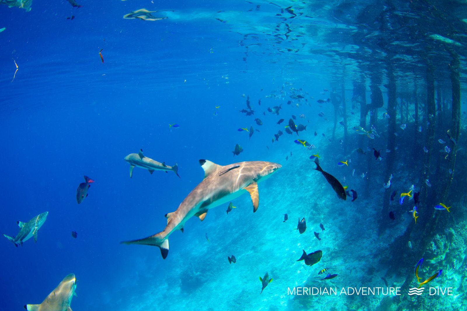 Raja Ampat diving.