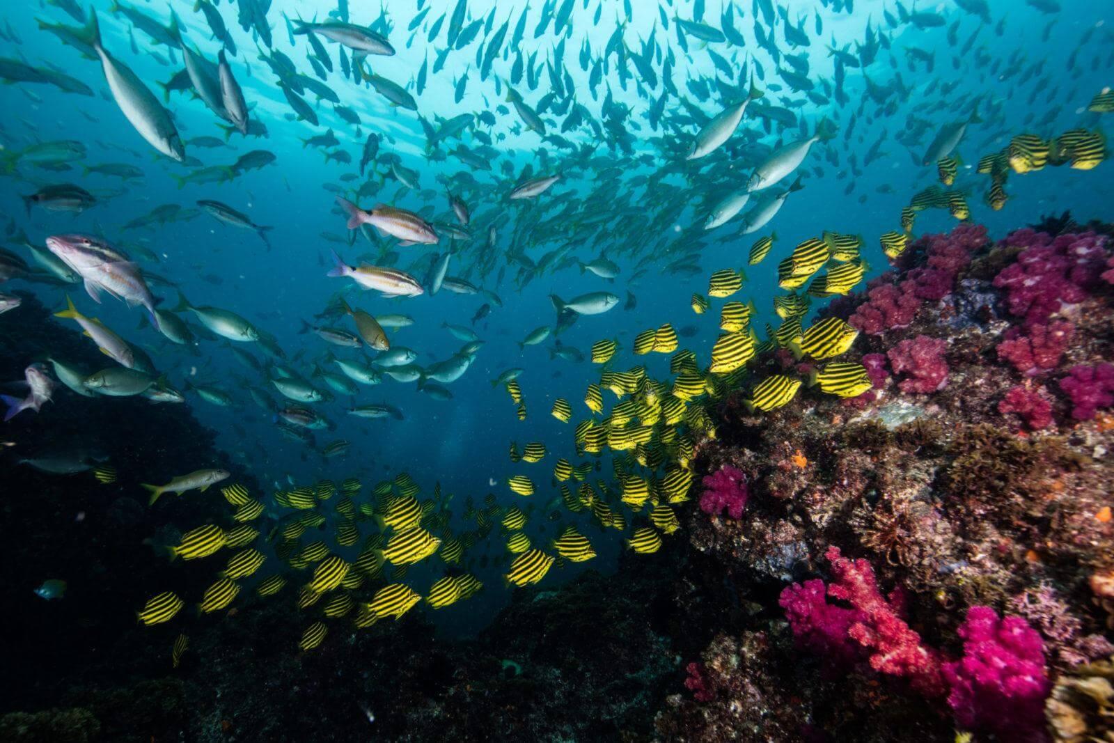 breathtaking view of underwater Winter diving at Julian Rocks in Byron Bay