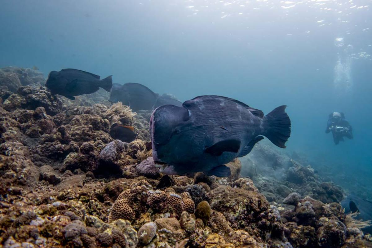 7 Great tips for Responsible Diving