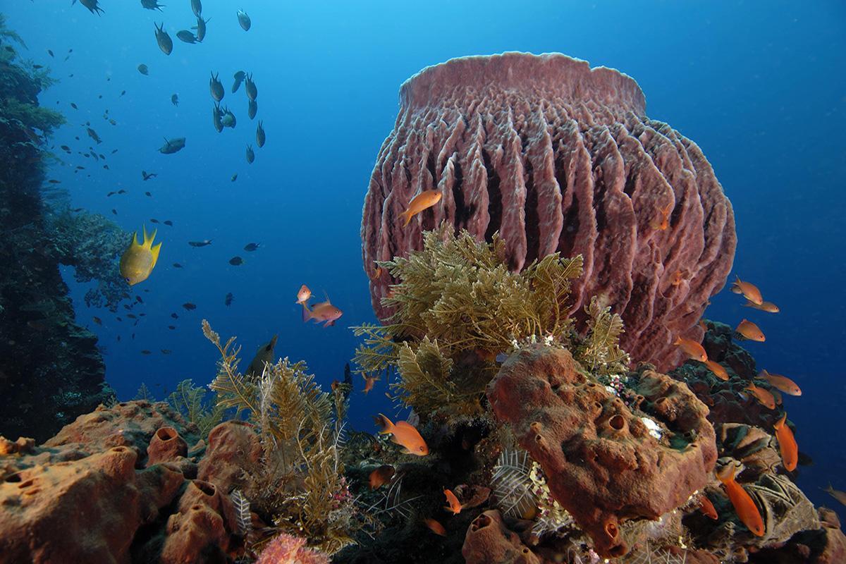 Batu Rufas coral