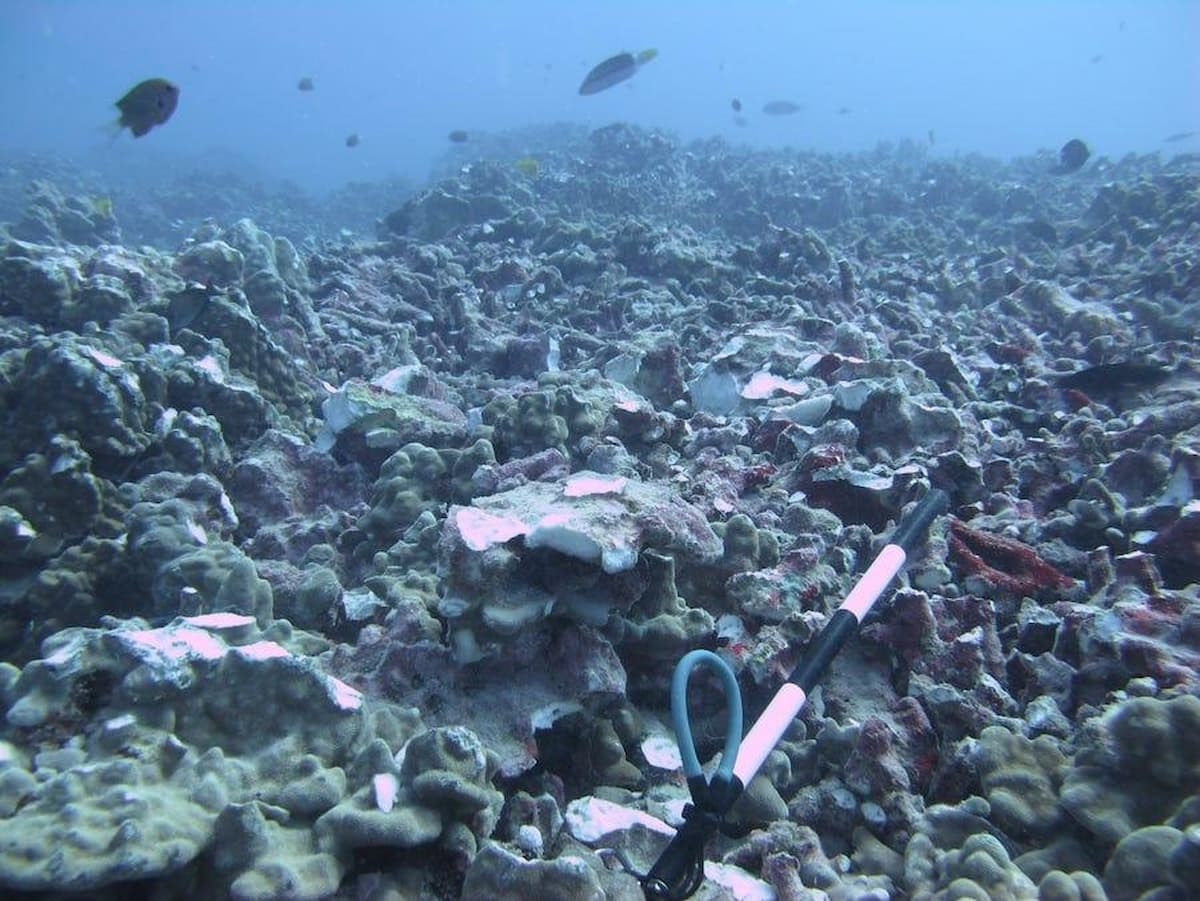 superyacht anchor damages coral reef in Hawaii