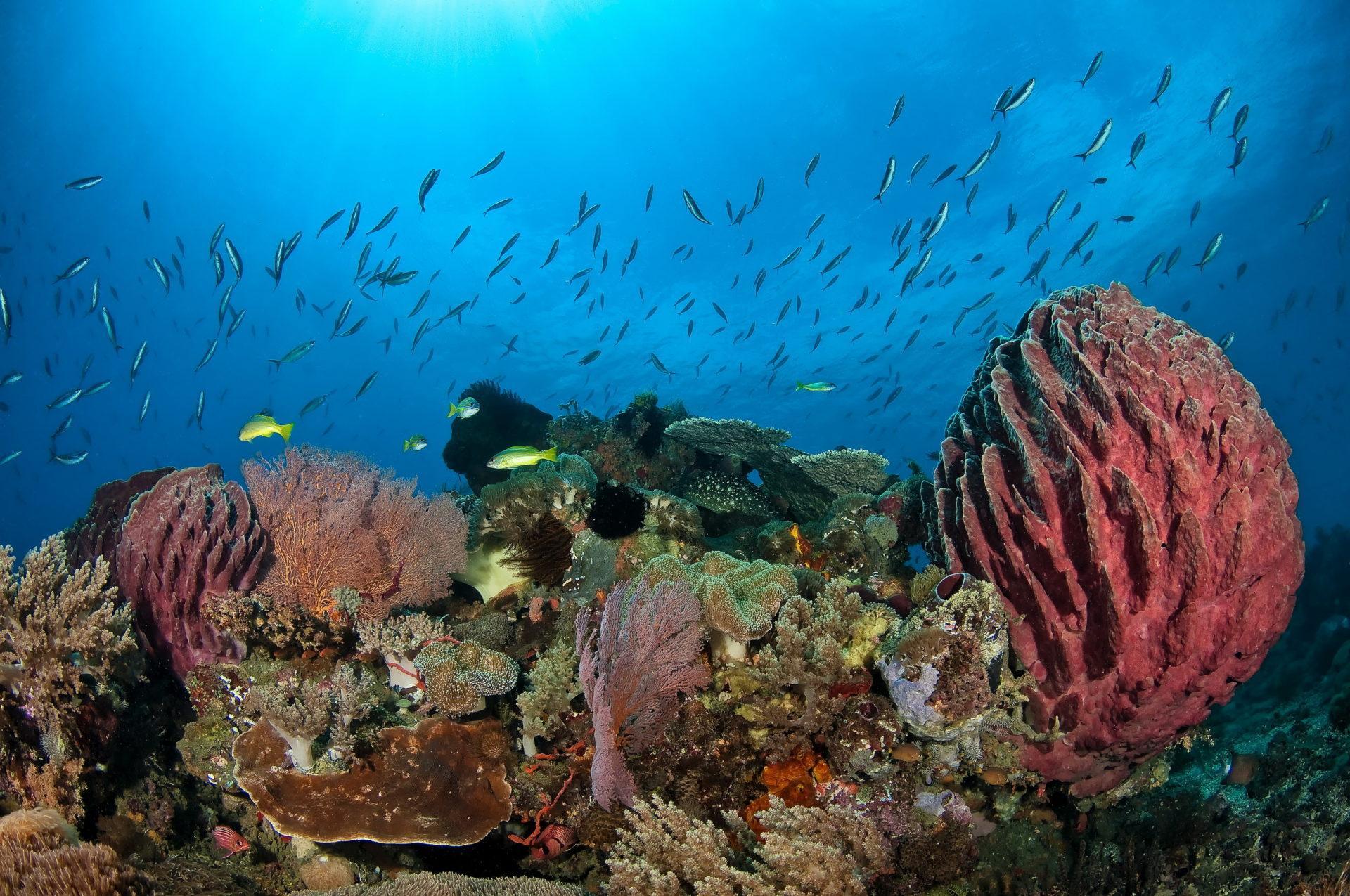 Scuba Diving of Timor Leste
