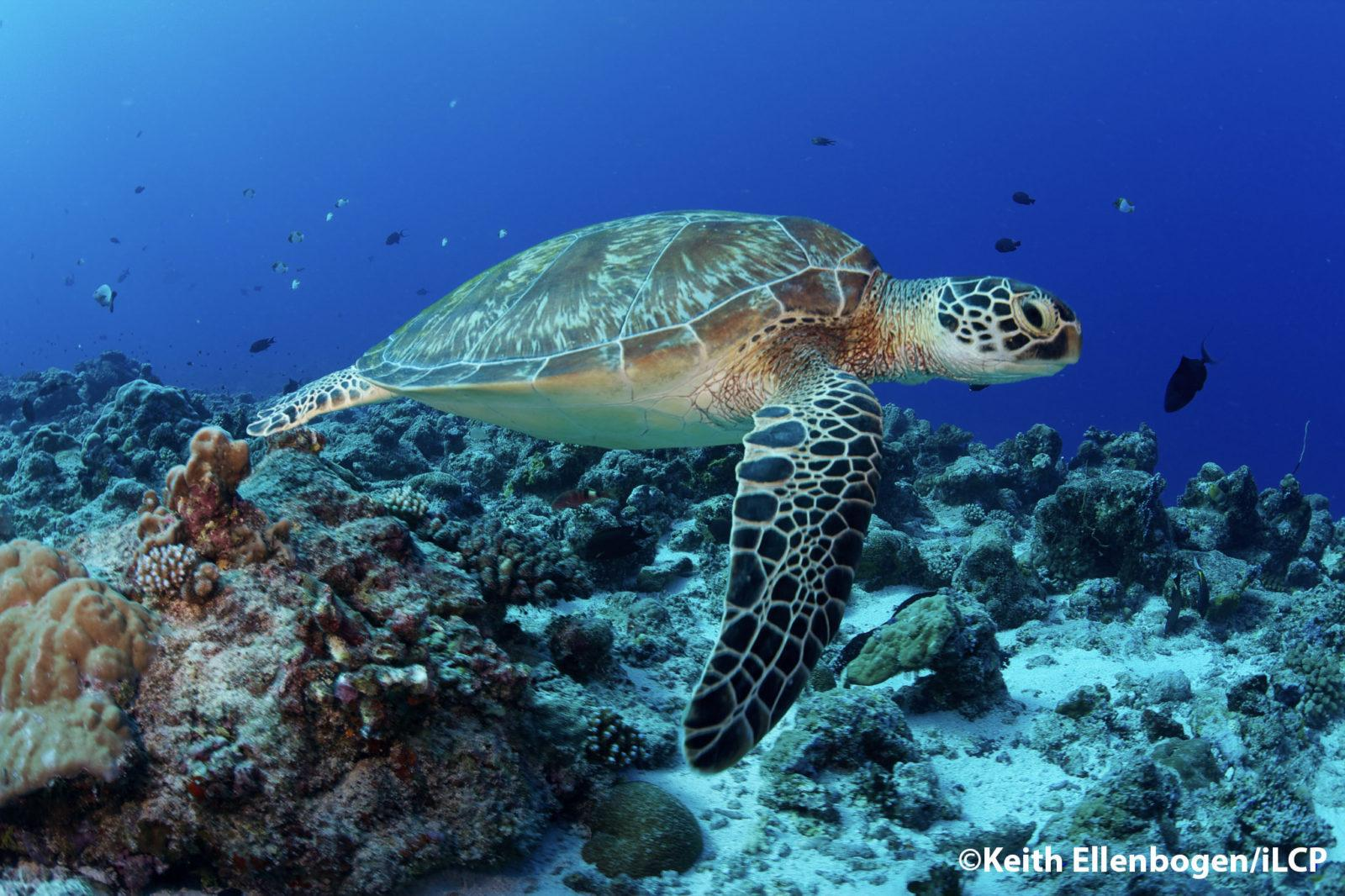 Palau a Jewel of the Ocean