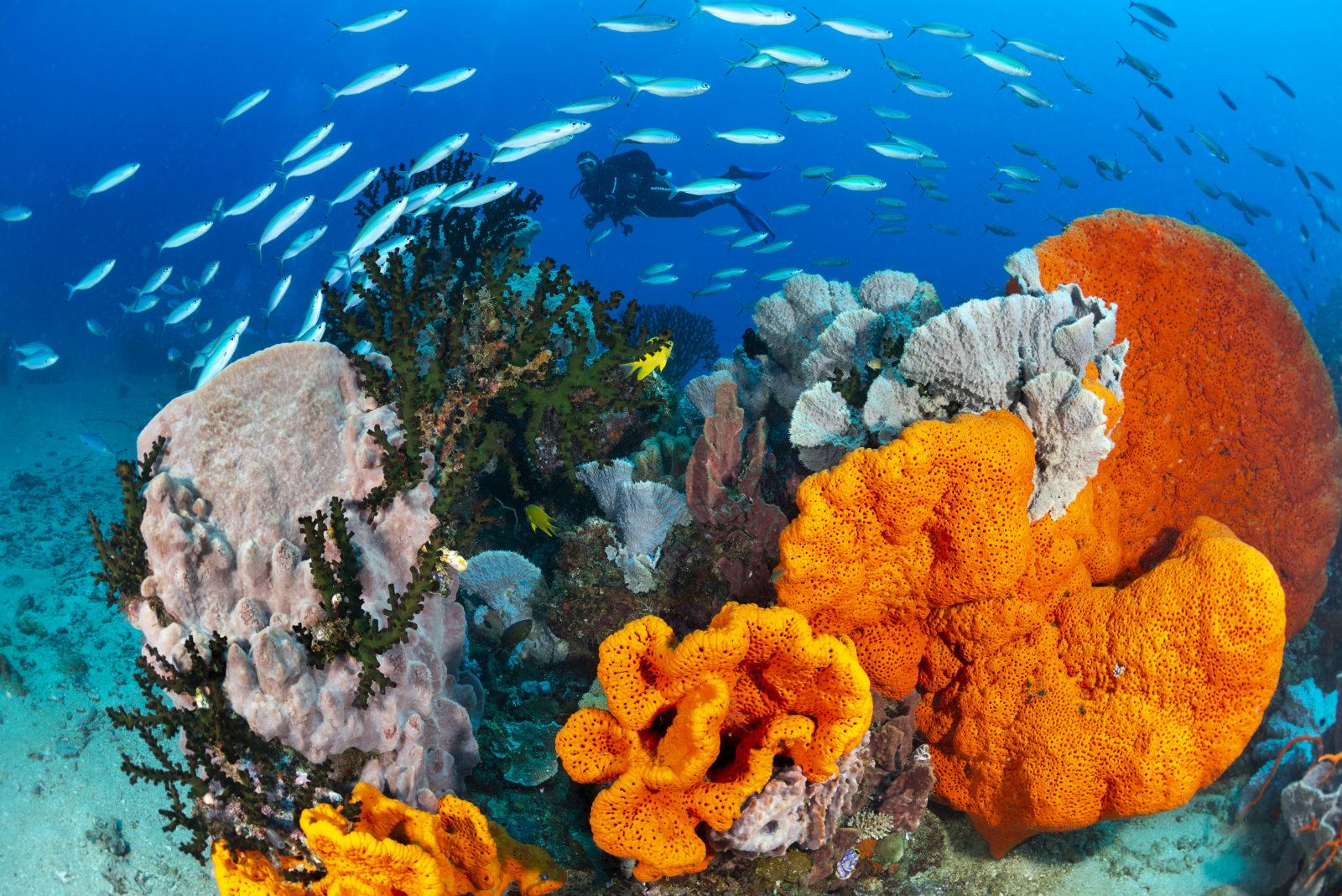 Ann Sophies Reef by Gary Bell at Walindi Resort