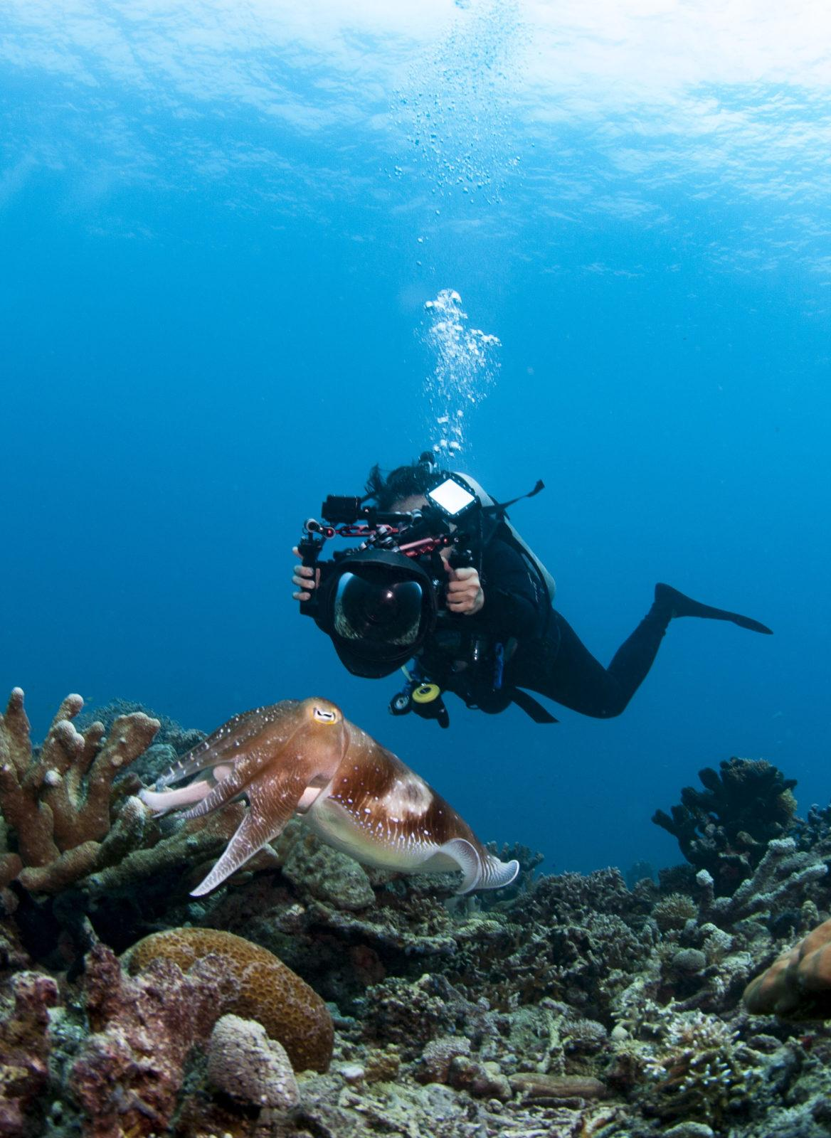 Underwater scenery at the natural reef of Lankayan