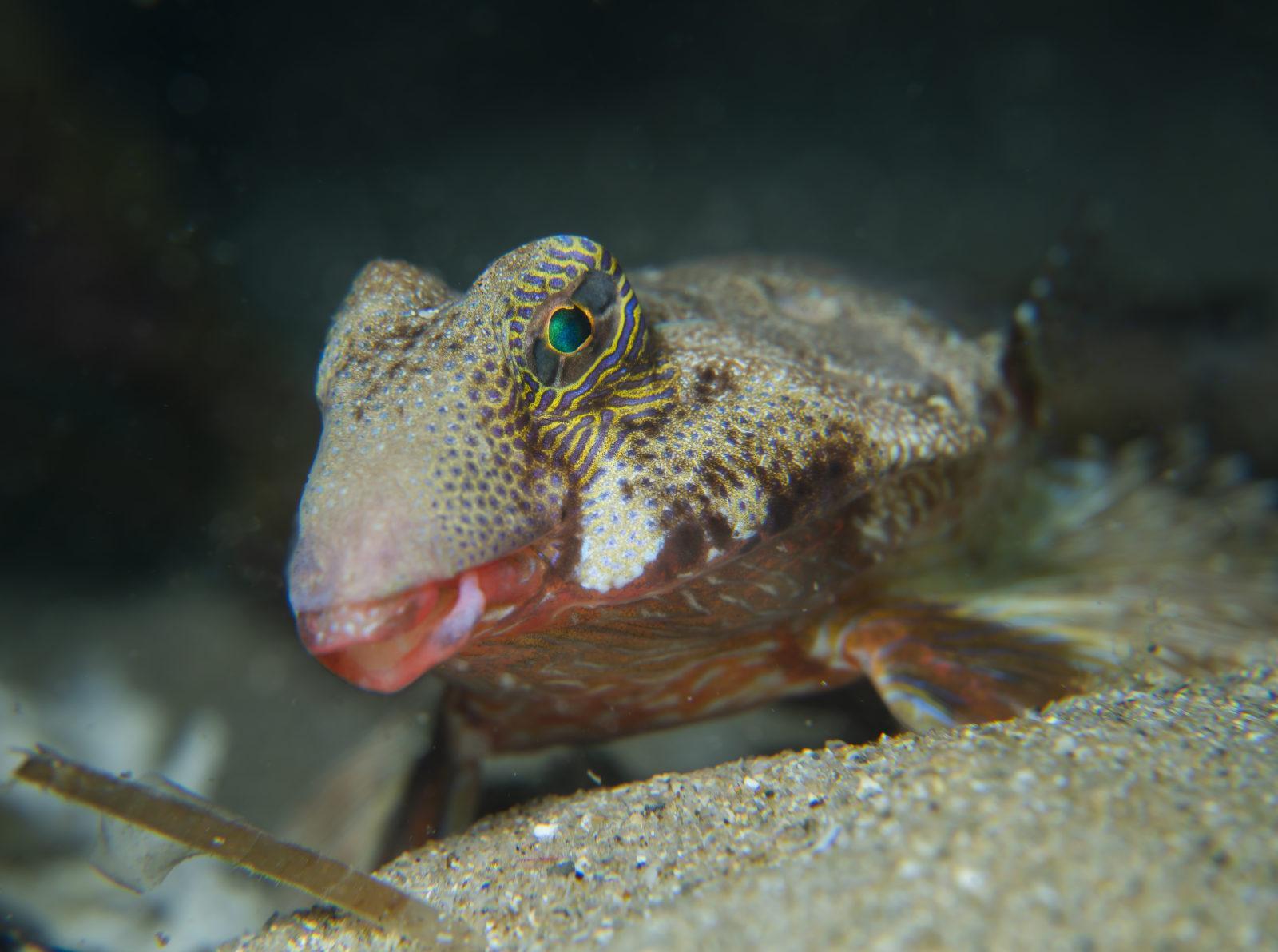 Stinkfish