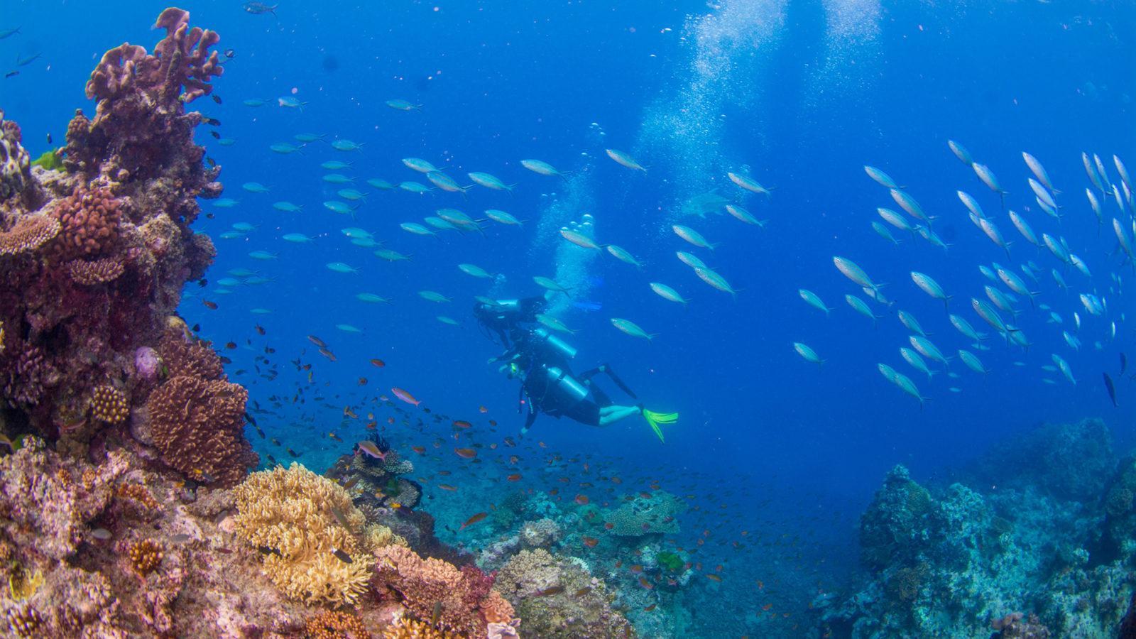 Scuba Diving Expedition by Divers Den