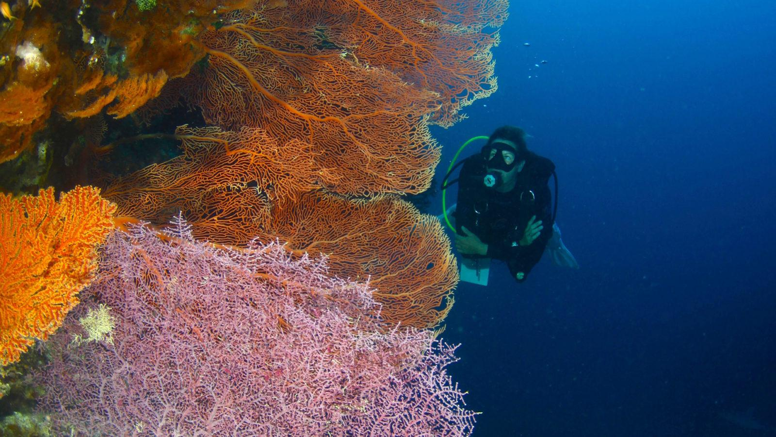 Scuba Diving along a Soft Coral Wall by Divers Den