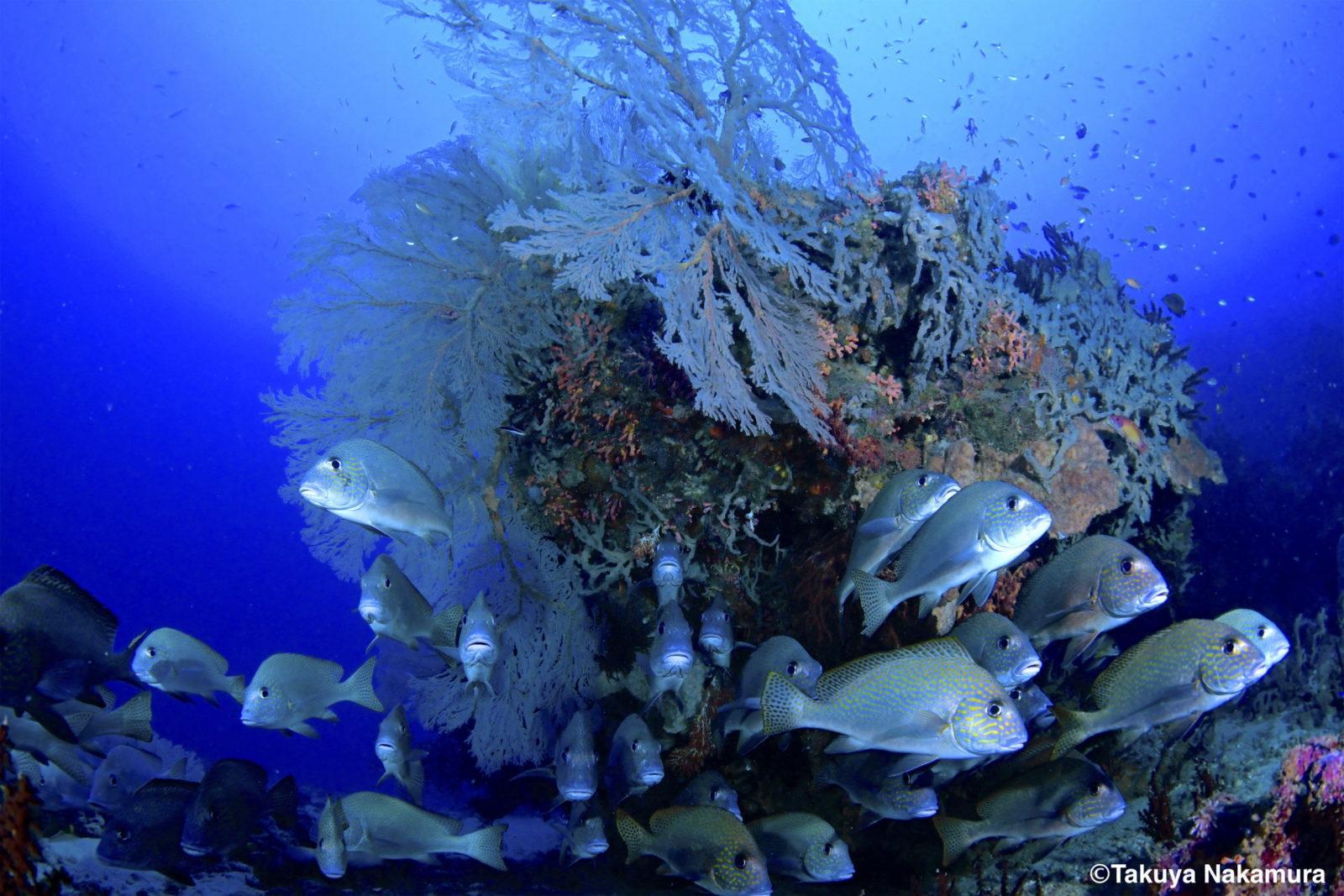 Scuba diving magic passage