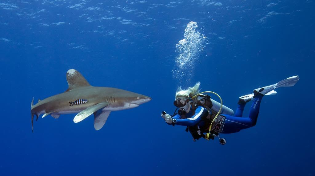 A Sustainable Future in Dive Travel and Ocean Exploration.