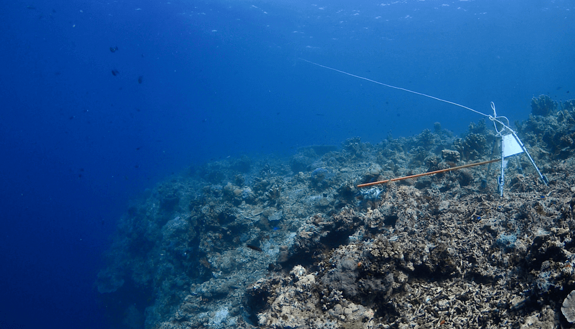 RUVS set up on a reef in Sabah. The camera is attached to the metal frame, with the baited pouch on a long 'arm' in front of the camera. (Photo credit: Christian Loader)