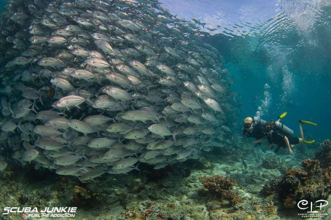 Scuba Junkie Wins Global Diving Award
