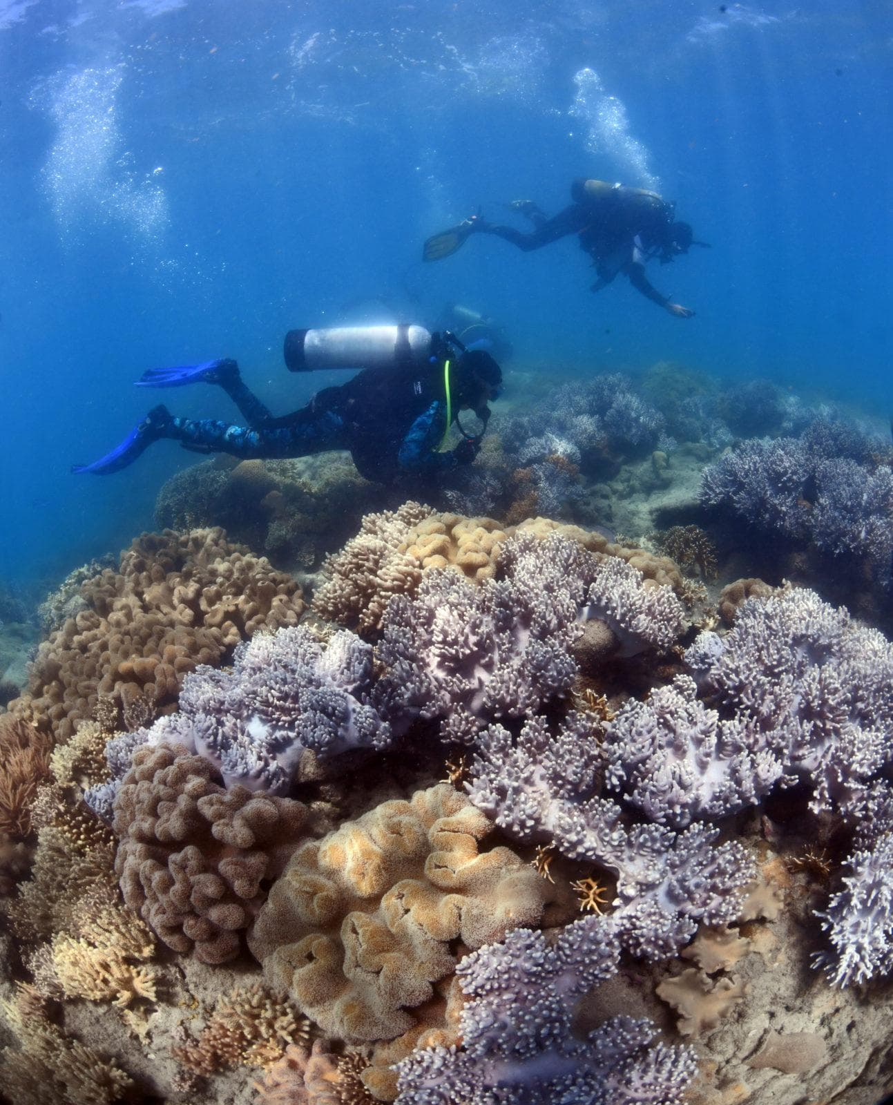 GBRF researchers checking corals for signs of spawning. Credit Great Barrier Reef Foundation