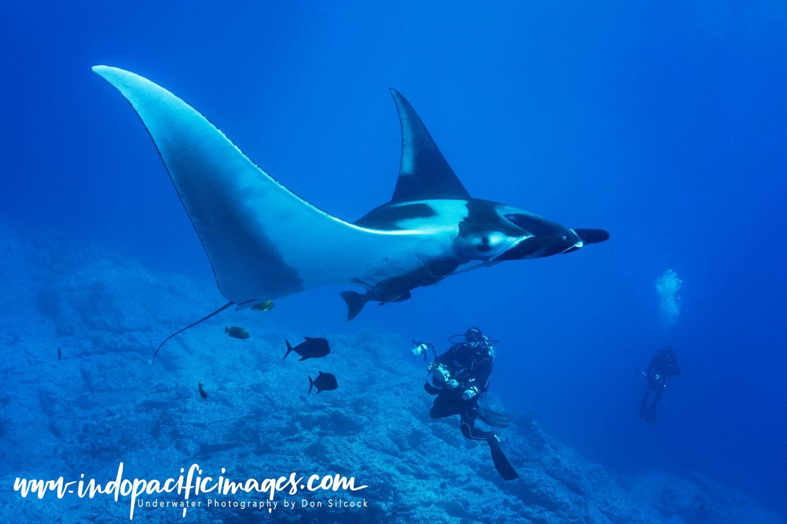 Mexico, Giant Oceanic Manta