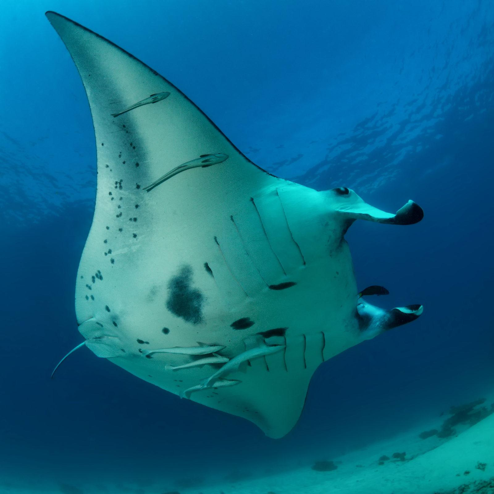 300 Species of Sharks and Rays Threatened with Extinction