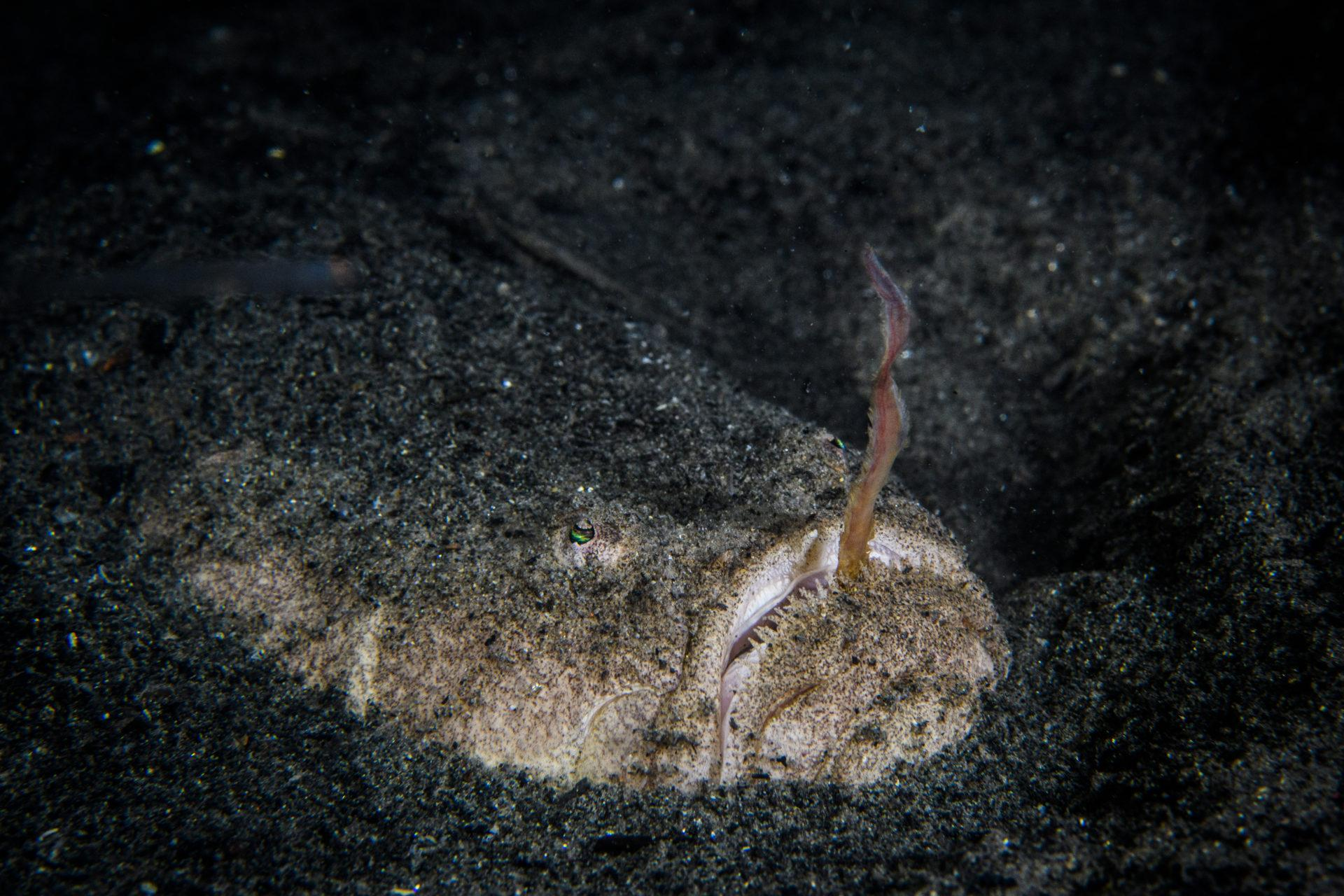 Burst mode – Underwater Photography Masterclass