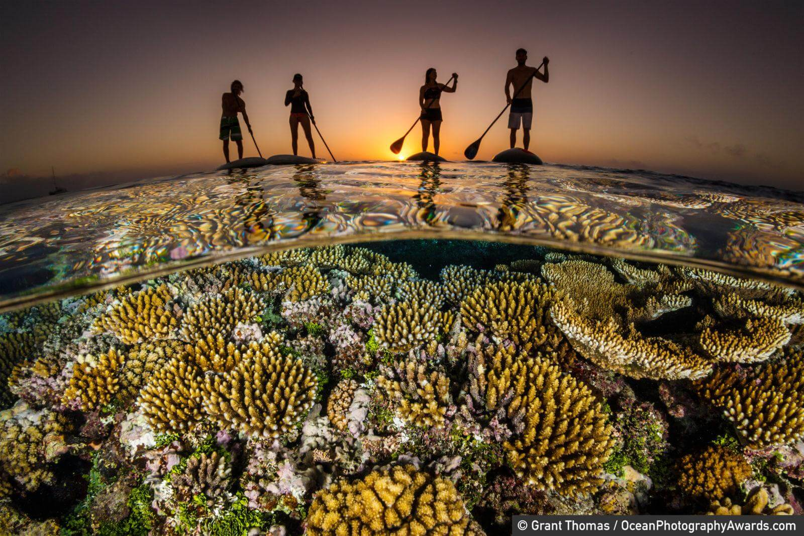 """Paddle boarders float above a reef at sunset. """"This image is one of a series of images aimed at demonstrating the innate bond humans have with the ocean, whether we are physically in it or just floating on the surface,"""" says photographer Grant Thomas"""