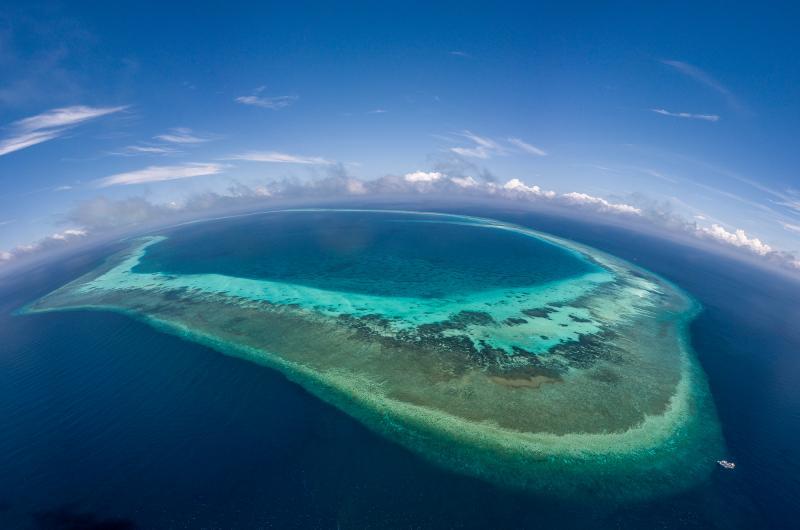 Remote reefs tubbataha philippines