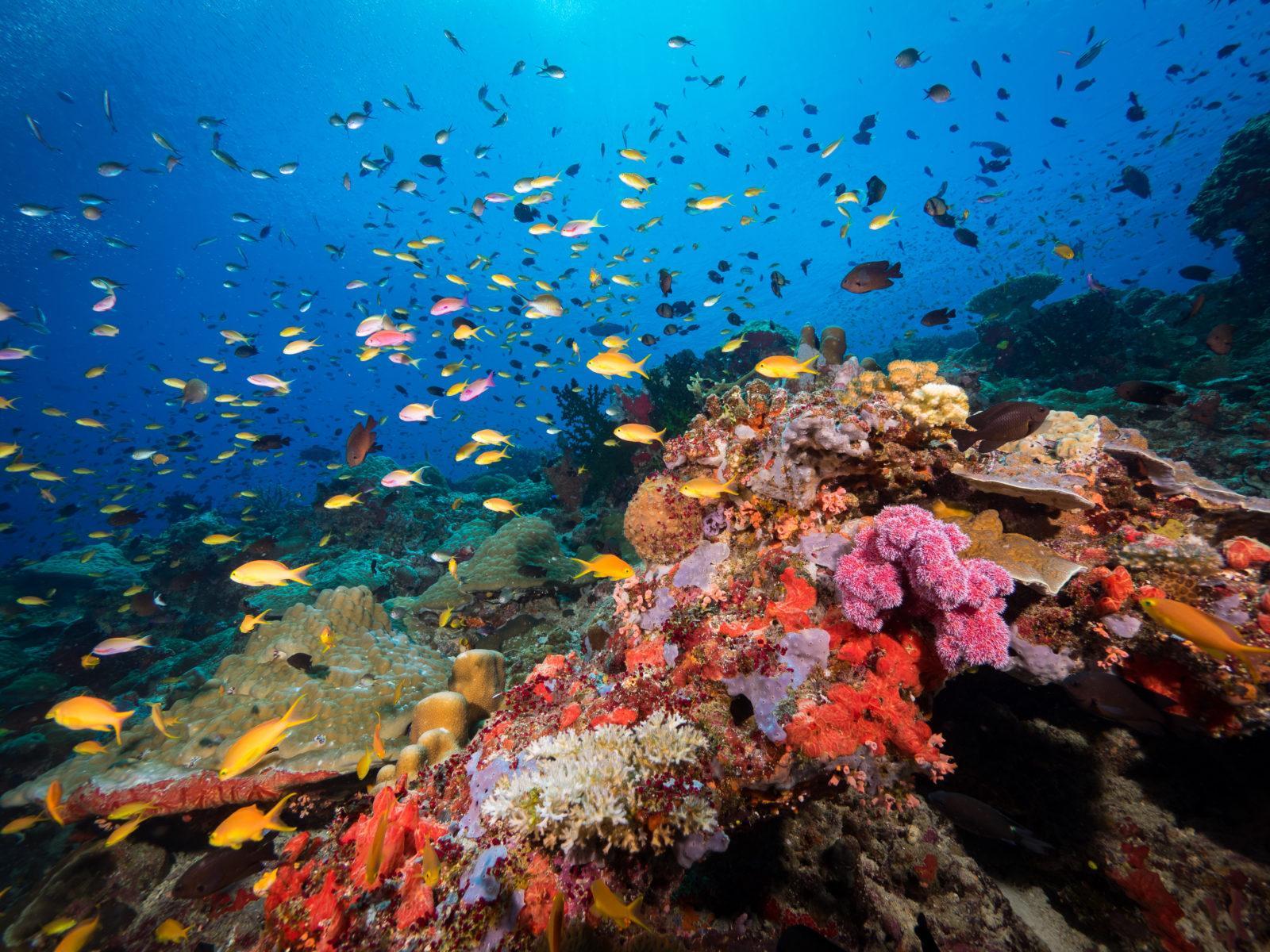 Tufi Resort Scuba Diving