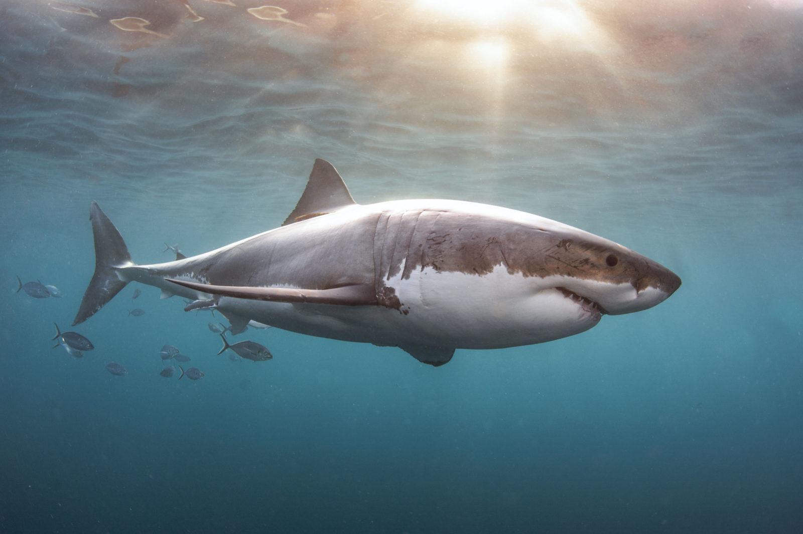Legendary Rodney Fox Shark Expeditions Q & A